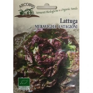 Lettuce 'Marvel of Four Seasons' seeds - 5g