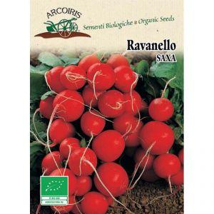 Ravanello Saxa - Semi bio 5g